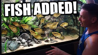 Adding the NEW fish to the AQUARIUM!! The king of DIY