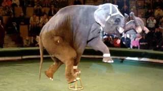 Смотреть онлайн Выступление огромных слонов в цирке
