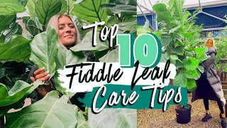 TOP 10 FIDDLE LEAF FIG CARE TIPS... lol I'm obsessed