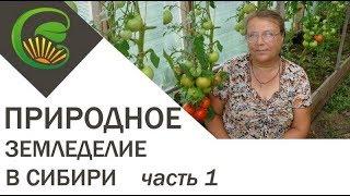 Природное земледелие в Сибири