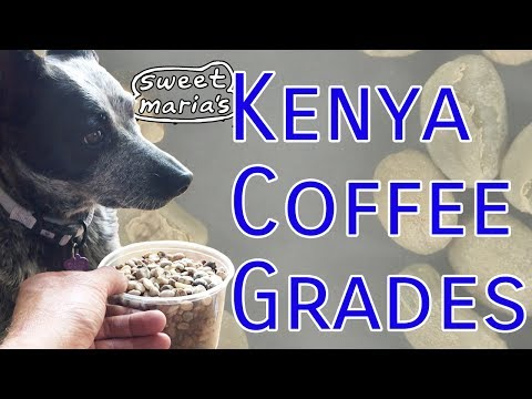 Kenya Coffee Grades