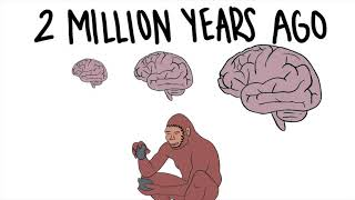 The Evolution of the Human Brain