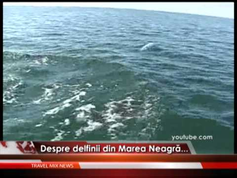 Delfinii din Marea Neagră – VIDEO