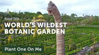 Nong Nooch: The Worlds Wildest Botanic Garden — Plant One On Me — Ep. 144