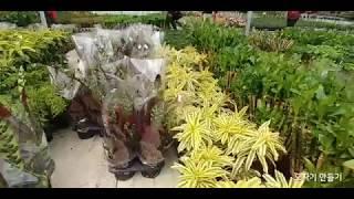 실내공기정화식물(집하장)Indoor Air Purification Plants