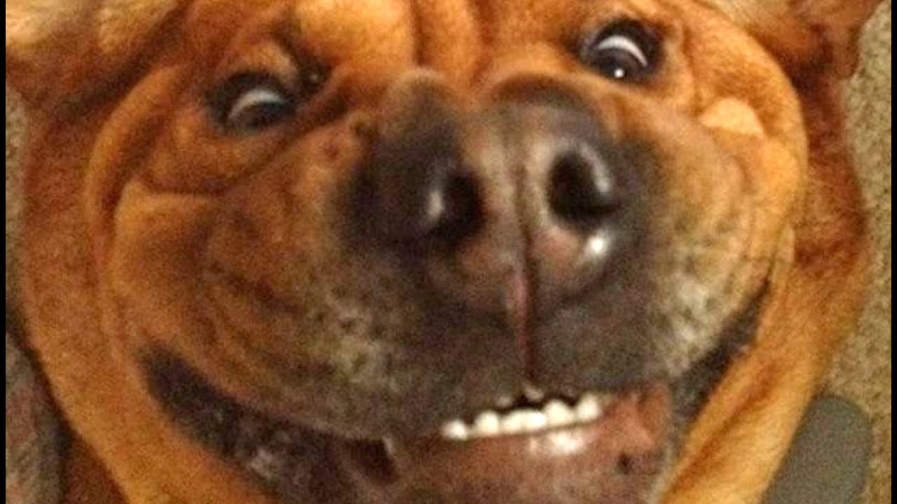 14 Dogs Who Made Poor Life Choices thumbnail