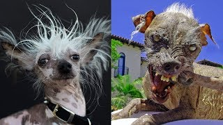 Trendy video Trendy - TOP 10 najškaredších psov na svete