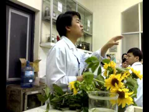 Giảng Bài Môn Thực vật - Đại Học Dược Hà Nội