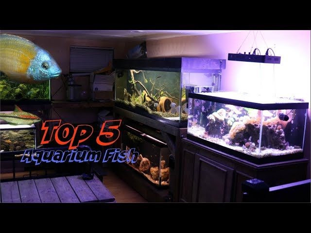 My TOP 5 Fish In My Fishroom..Today