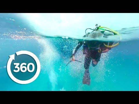 360 Köpek Balıkları ile Dolu Gemi Batığı Ziyareti