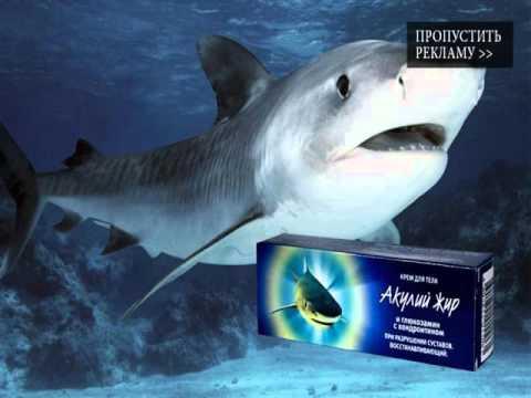 акулий жир в капсулах инструкция по применению