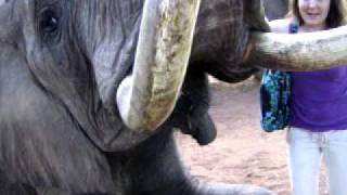 preview picture of video 'Feeding Liwa the Elephant Livingstone, Zambia May 27, 2010'
