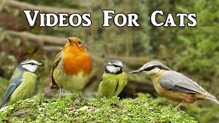 Videos for Cats to Watch : Little Birds Extravaganza