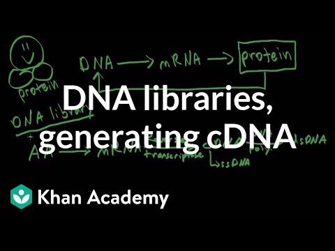 DNA libraries & generating cDNA (video)   Khan Academy