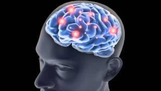 ¿Sabías qué el azúcar daña tu cerebro?