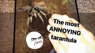 This TARANTULA is SO ANNOYING !!! (but for a creative reason)