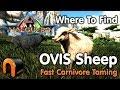 ARK VALGUERO 3 Main Ovis Locations Where To Find Ovis Sheep