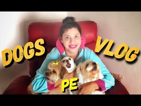 My Dogs Cutest Makeover Ever | SS vlogs :-) | Hindi