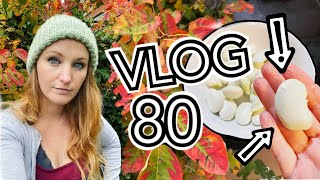 Things are looking a lot like Autumn on the Allotment! || Plot 37 (Episode 80)