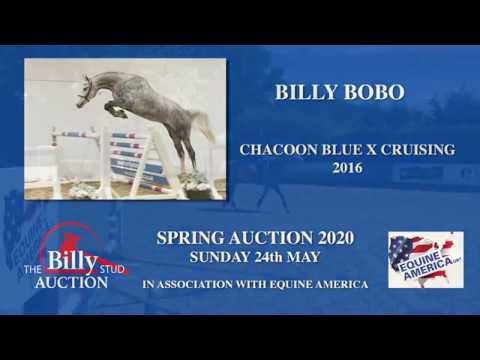 Billy Bobo
