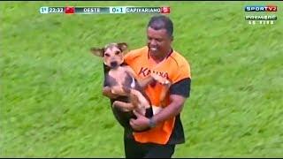 animale animale pe teren