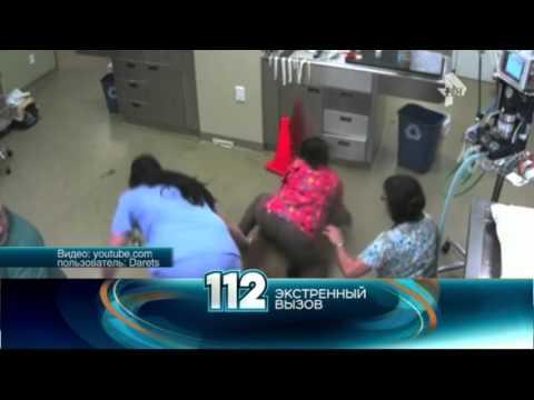 Убегая из ветклиники собака захватила медсестру