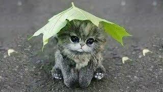「猫かわいい」 すごくかわいい子猫 - 最も面白い猫の映画 #241
