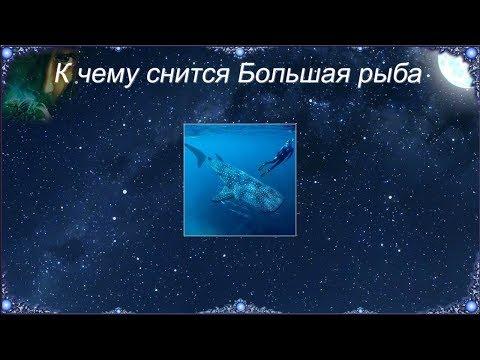 К чему снится Большая рыба (Сонник)