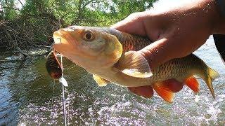 Форум о рыбалке на реке чир