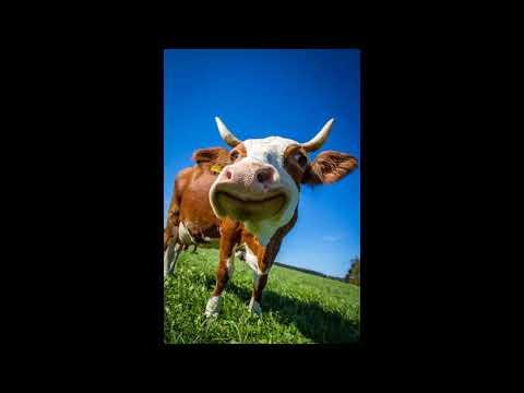 'Milá Sally...' - Smím působit jako nafoukaná a sebestředná kráva!