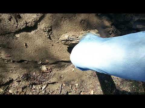 me nel fango 2