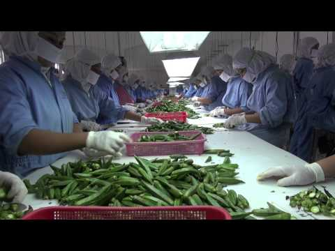 Video Kacang Edamame, Tanpa Ini Jepang Tidak Makan Kedelai