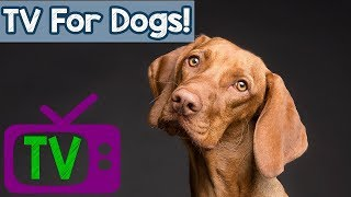 Dog Music TV for Relaxing  - Videos for Dogs to watch at home - TV for Dogs with anxiety and stress