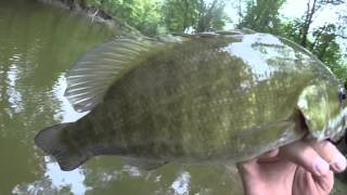 Fly Fishing for smallmouth Bass - Ohio