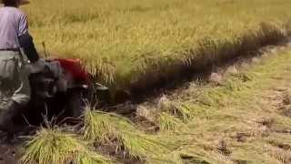 preview picture of video 'Reaper cum Binder Rice Paddy Wheat Burdwan West Bengal'