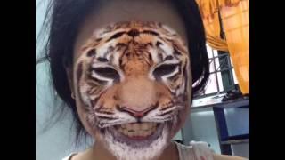 cọp biết hát, tiger can sing, nhạc thiếu nhi kìa con bướm vàng