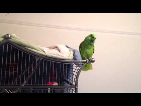 The Funny Things Our Parrot Says Before Bed!