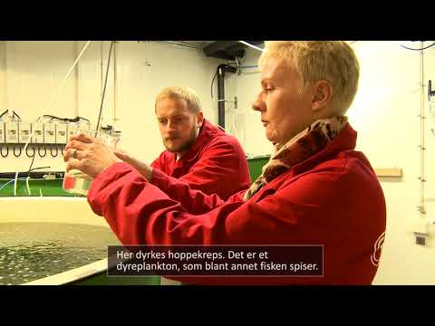 Norsk senter for Planktonteknologi