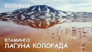 Мир Приключений - Красная лагуна Боливия. Фламинго у вершин Анд . Самые красивые места Южной Америки