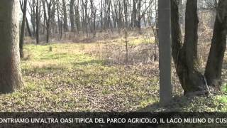 preview picture of video 'trivelle nel parco'
