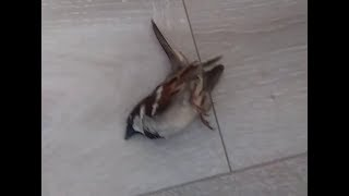 Poor Injured bird comes back to life