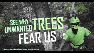 Best tree removal video ever No mercy for weak trees 1080p