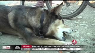 Fake Park Ranger is Targeting Dog Lovers