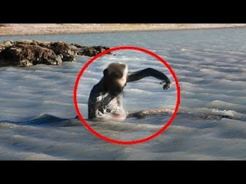 15 CRAZIEST Things Found Washed Up After Storms