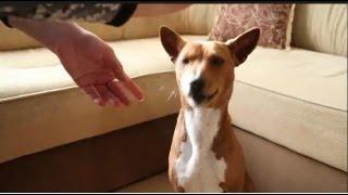 Смотреть онлайн Воспитание, уход и дрессировка щенка