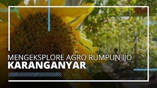 VIDEO TRAVEL | Menikmati Indahnya Ribuan Bunga di Agro Rumpun Ijo Karanganyar