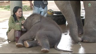 Happy 3rd birthday to baby elephant Navann | Kholo.pk