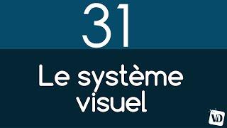 Vignette de Les 5 zones impliquées dans le système visuel