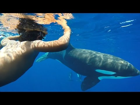 GoPro – Arc Mayotte – Episode 01 – Orca