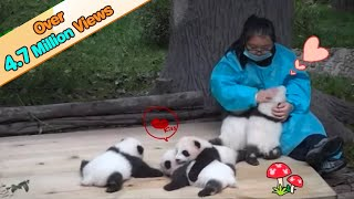 Cute Little baby Pandas to Love